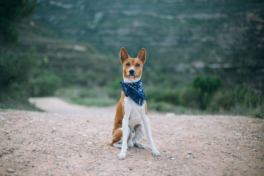 hiker doggo